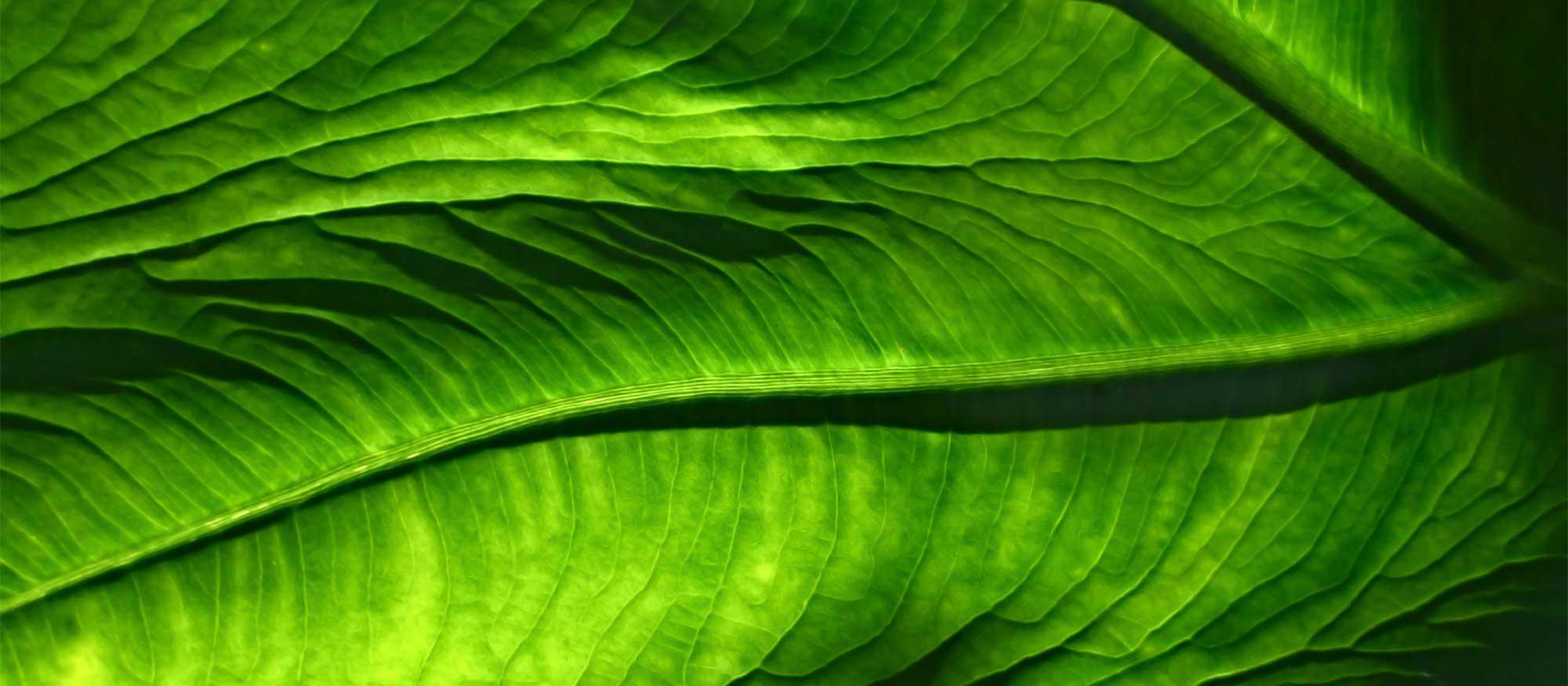leaf pattern deep green color